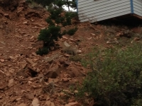 2013 Colorado Floods