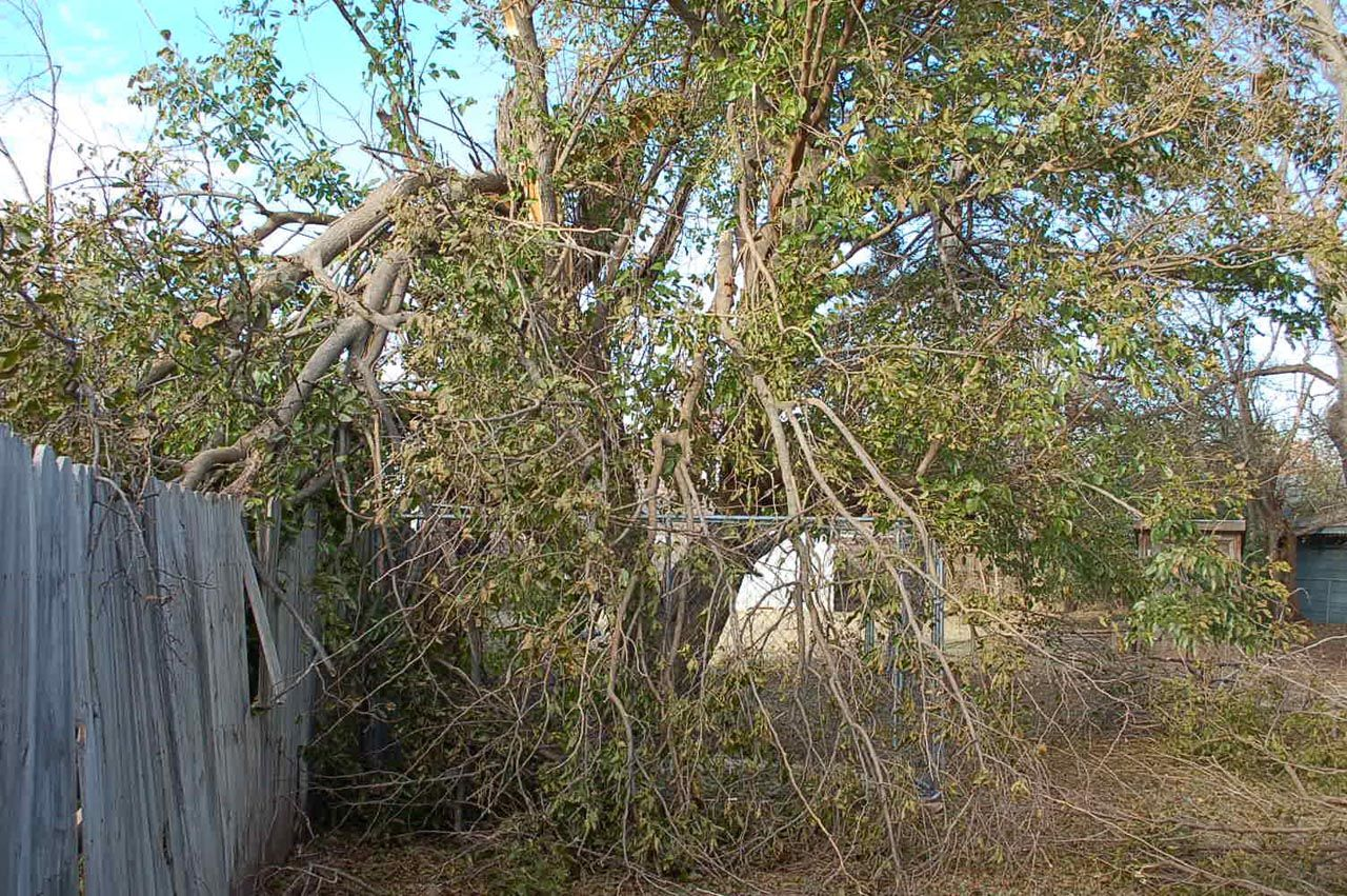 storm damage 004_DaveJohnson