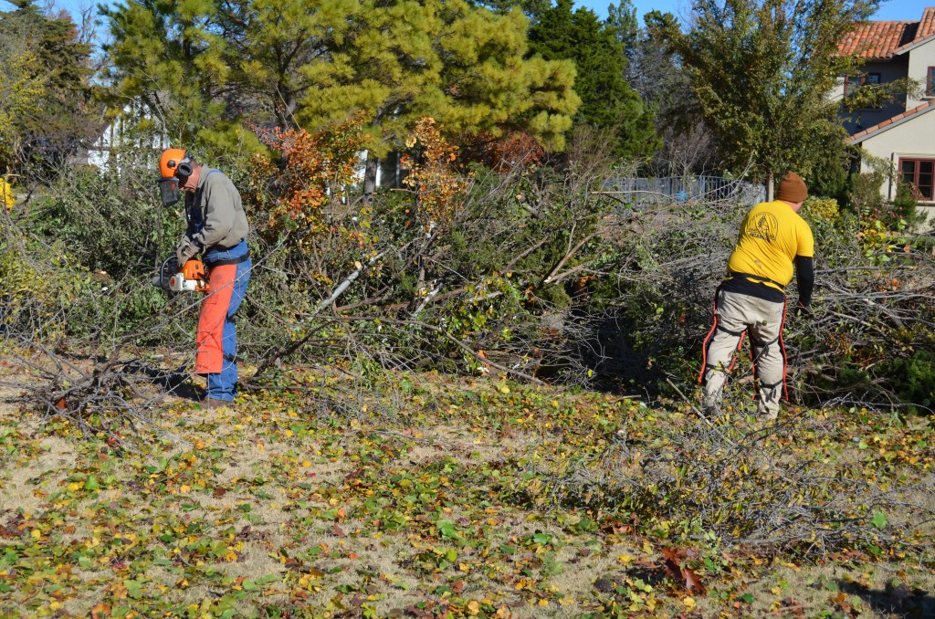 Tree limbs pile up, as Disaster Relief volunteers clear out affected yards (Photo: Chris Doyle)